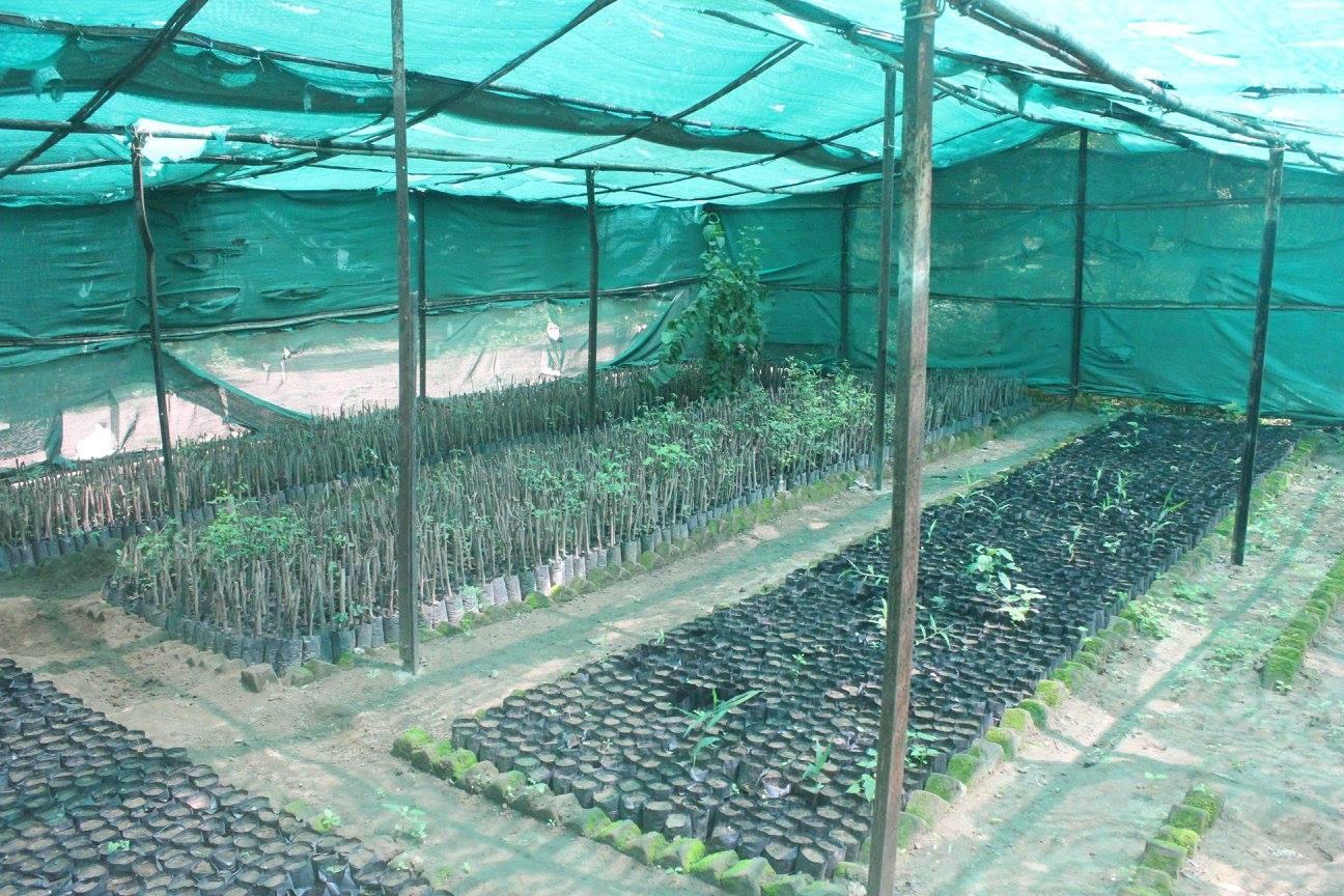 Vanya Organic
