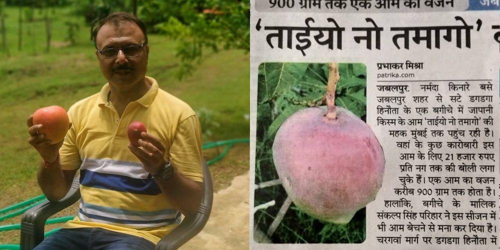 Miyazaki – Amazing mango variety grown by MP couple costs Rs.2.7 lakhs per kg